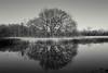 Spring time tree (martincutrone) Tags: breath taking landscape breathtakinglandscape