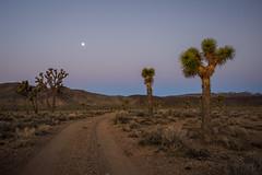 Mojave Desert Moon at Sunrise (Jeffrey Sullivan) Tags: joshua tree forest sunrise mojave desert death valley national park panamint springs california usa landscape nature travel photography canon eos 6d road trip photo copyright 2017 february jeff sullivan beltofvenus photomatix hdr