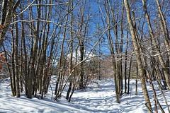 A spasso nel bosco addormentato in attesa della primavera (giorgiorodano46) Tags: giorgiorodano marzo2018 march 2018 italy appennino apennines neve snow neige winter inverno hiver ovindoli magnola nikon abruzzo