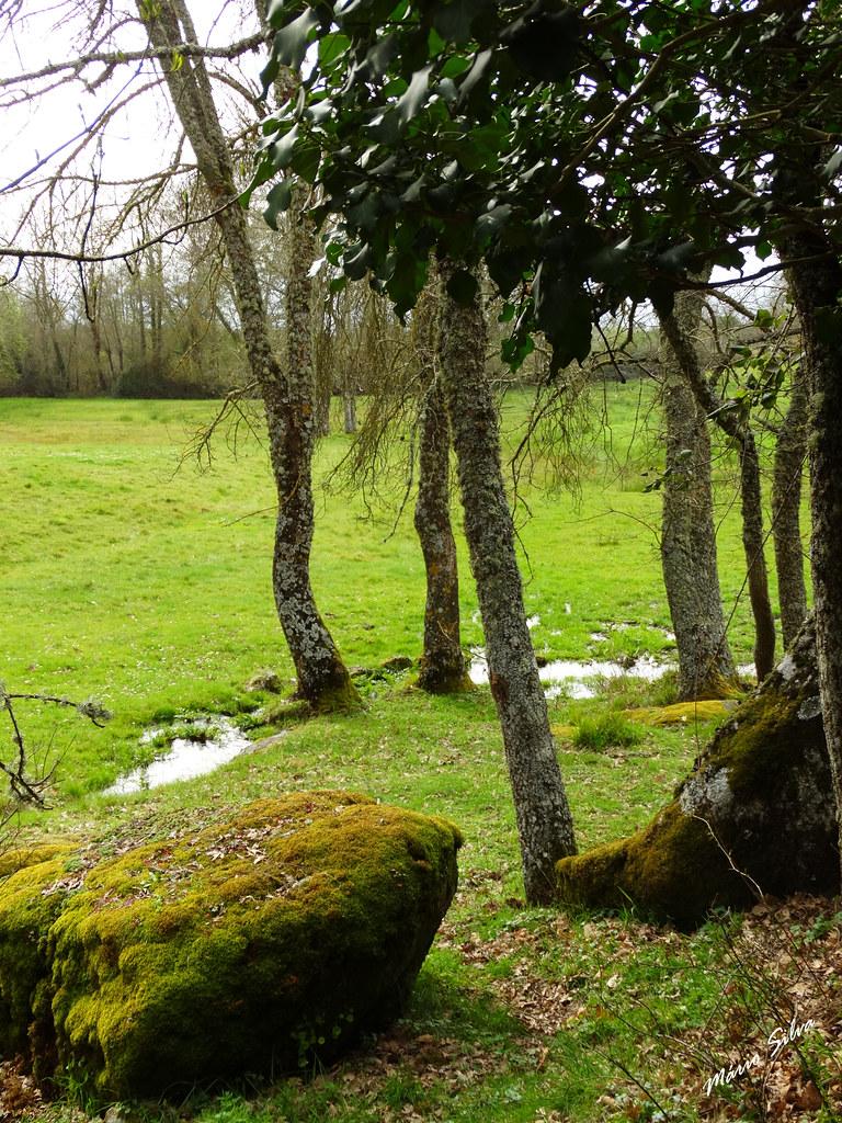 Águas Frias (Chaves) - ... serpenteia  a  água por entre as árvores e encharcando os lameiros ...