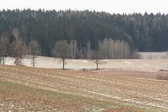 symetry of snow (Fotograf bez nápadu) Tags: symetry field nature snow spring trees wood color coloredit fujix ezuiko 135mm