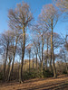 Chartersfield Wood (Bruce Clarke) Tags: wood olympus oxfordshire winter woods outdoor woodland trees copse m43 landscape beech beeches chilterns chartersfieldwood bluesky 714mmf28 omdem1 barebranches treesinbud wyfoldcourt forestrycommission