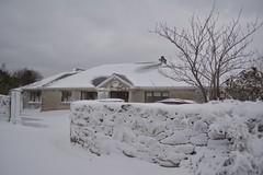 DSC_8028 (seustace2003) Tags: baile átha cliath ireland irlanda ierland irlande dublino dublin éire glencullen gleann cuilinn st patricks day zima winter sneachta sneg snijeg neve neige inverno hiver geimhreadh