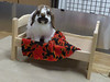 FOR_SHIRLEYbed (pennyroyalnorwich) Tags: adoptable rabbits bunnies ikea doll beds friendsofrabbits