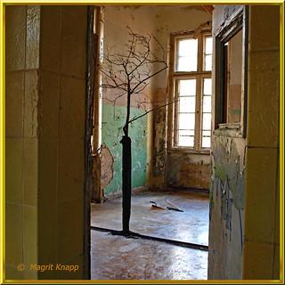 Ehemalige Heilstätte Baum im Raum