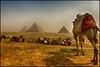 Camellos y pirámides. (bit ramone) Tags: pirámides giza keops kefrén mikerinos egipto cultura viajes travel bitramone camellos camel مِصر egypt أهراماتالجيزة gizapyramidcomplex cairo elcairo الجمال والأهرامات
