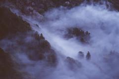 Big Sur, Ca. (Duvalin Papi) Tags: bigsur california sadtographer naturephotography vscofilm nature landscape fog vsco travel