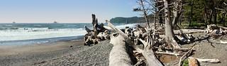 Rialto Beach with driftwood