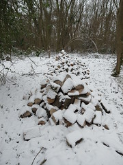 R1039760 (Stitchinscience) Tags: snow oxfordshire pile wood woodpile