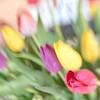 Tulips (cнαт-ɴoιr^^) Tags: 20180315imgp9486 openaperture 28 flora flower fiori fleur blossoms frühling lente spring primavera printemps 35mm pentaxk5ii lensbaby
