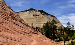 ZION NATIONAL PARK : Checkboard Mesa (AlCapitol) Tags: mesa checkboardmesa zion nationalpark nikon d800 utah