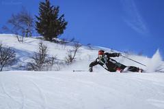 Aria di primavera (pucciarellic) Tags: ski sci skiinstructor maestrodisci neve inverno snow winter primavera spring alberi trees sun sole 4maticskischools scuolascitonalepresena passodeltonale pontedilegno ghiacciaiopresena trentino lombardia italia canon 600d 70200mm