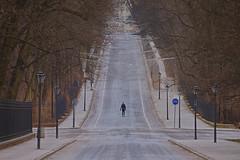 Ghiacciato / Frozen (Łazienki Park, Warsaw, Poland) (AndreaPucci) Tags: warsaw poland winter runner avenue ice andreapucci royalbath lazienki park