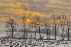 Sunset behind trees (GerWi) Tags: winter sunset sonnenuntergang bäume trees fz1000 himmel sky feld sonne clouds warm gelb orange licht bluehour