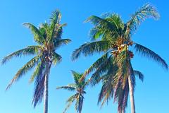 Key West (Florida) Trip 2017 0169Ri 4x6 (edgarandron - Busy!) Tags: florida keys floridakeys keywest cemetery cemeteries keywestcemetery