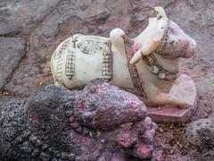 LR Madhya Pradesh 2018-2240050 (hunbille) Tags: birgittemadhyapradesh20181lr ghat ahilyabai ghats ahilyabaighat nandi shivalingam shiva lingam india madhya pradesh madhyapradesh maheshwar narmada river holy ahilya