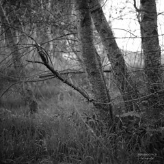 image0451ok (Champy88) Tags: bronicaec nikkorp7528 fujifilmneopanacros100 reflectamf5000 film 120film mediumformat formatomedio bn blancoynegro blackandwhite negative neopan100 noiretblanc filmphotography filmisnotdead fujifilm analog 6x6 6x6only