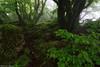 Fairytale Forest (Hector Prada) Tags: bosque niebla hayedo primavera hojas verde naturaleza forest fog beechforest spring leaves green nature mist magic mood rocks enchanted encantado basquecountry