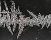 DSC_7800-2 (harynjk23) Tags: frostwork winter freez jégvirág tél macro nikon d5300 extension tubes