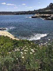 La Jolla Cove (Anna Sunny Day) Tags: lajollacove sandiego beach shore ocean seals sealions