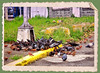 IMG_4350_edit (cnajhar) Tags: pigeons pombas rolinhas aves food nature birds