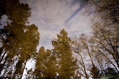 _MG_3444-1 (Stuart284) Tags: nature tullymore northernireland canon