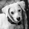 Remedy10Mar201829-Edit.jpg (fredstrobel) Tags: dogs pawsatanta phototype atlanta blackandwhite usa animals ga pets places pawsdogs decatur georgia unitedstates us