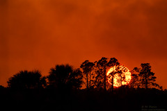Sunset, Sky, And Silhouettes (ac4photos.) Tags: sunset landscape nature silhouettes everglades naturephotography sunsetphotography landscapephotography silhouettephotography nikon d500 tamron150600mm ac4photos ac camping florida