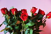 DSC_8977 (PeaTJay) Tags: nikond750 reading lowerearley berkshire macro micro closeups gardens indoors nature flora fauna plants flowers bouquet rose roses rosebuds