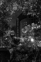 GRU, sp (Th. C. Photo) Tags: guarulhos gru sp street streetphotography streetphoto streetphotographysp streetphotogranight photography fotografia rua fotografiaderua pb bw night noturna noite