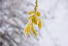 _FN27511.jpg (Francesco_Finocchiaro) Tags: neve landscape appennino orizzontale nebbia burian pianteefiori primavera sanluca freddo bologna macro italia ghiaccio emiliaromagna inverno nevicata francescofinocchiaro esterni