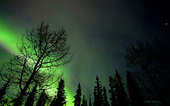 Wonders of the Winter Night (Katy on the Tundra) Tags: northernlights auroraborealis nightsky