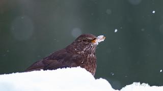 Frozen Beak