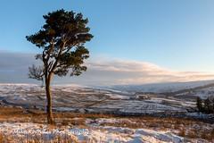 Lone Tree near Roughside (mikeknowles60) Tags: cumbria alstonmoor nenthead roughside tree sunset snowscene landscape snow breathtakinglandscapes