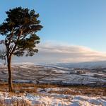 Lone Tree near Roughside thumbnail