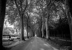 en quittant le Château de Vaux le Vicomte (Jack_from_Paris) Tags: jpr7634d800ebw nikon d800e nikkorafs24mmf14ged 24mm ligthroom capture nx2 wide angle prime lens noiretblanc bw monochrom vaux le vicomte france fouquet maincy parc château castle route arbres platane