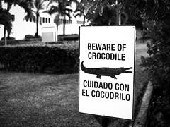 cuidado con el cocodrilo (jrblanco53) Tags: cocodrilo cartel warning cancun mexico bw crocodile