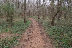 Out for a weird walk on an ultisolic footpath on a floodplain on the southern Piedmont in northern South Carolina in late December in a nature preserve. (Tim Kiser) Tags: 2017 20171227 conestee conesteesouthcarolina december december2017 froggybottomlink greenville greenvillecounty greenvillecountysouthcarolina greenvillecountylandscape greenvillesouthcarolina greenvillelandscape greenvillemetropolitanarea greenvillespartanburg img5777 lakeconesteenaturepark piedmontforest piedmontlandscape reedyriverfloodplain southcarolina southcarolinalandscape upcountry upcountrysouthcarolina upstate upstatesouthcarolina floodplainforest floodplainlandscape floodplainplants forestlandscape greenplantsinwinter landscape naturepark northernsouthcarolina northwesternsouthcarolina orangedirt orangesoil overcast park redclaydirt redclaysoil trail traillandscape ultisol wintergreenery winterlandscape winterplants woodedlandscape