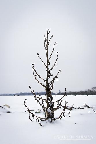 Thillay neige-11