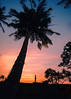 My Shortness is My Tallness (Navaneeth Kishor) Tags: sunset sun evening sky human silhouette dawn shade shadow coconuttree coconut shades clouds kerala keralam india godsowncountry keralatourism travel travelling street landscape landscapes