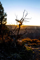 Grand Canyon-15 (amylippman1) Tags: 2016 canyon grandcanyon southrim southwest