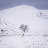 Assynt Tree (stevemillington.co.uk) Tags: snowymountains snow scotland scottishmountains westernscotland lonetree squarecrop leegradfilters leefilters