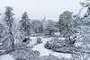 not much color on cloudy days (kipuna (on/off)) Tags: lumi kallio talvi turku suomi finland snow trees
