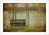 Con el agua hasta las ideas (V- strom) Tags: paisajes landscape madera wood banco árbol tree settle agua water río river otoño autumn texturas textures hierba grass nikon nikon2470 nikond700 verde green concepto concept vstrom luz light flowers flores