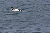 IMG_9672 (armadil) Tags: mavericks beach beaches californiabeaches bird birds loon loons swimming ocean
