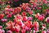 P3080033 (Vagamundos / Carlos Olmo) Tags: dallas usa eeuu vagamundos vagamundos2018 texas tejas flower flores jardín garden arboretum botanical botanicalgarden jardínbotánico