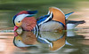 Anatra Mandarina // Aix Galericulata (Christian Papagni | Photography) Tags: segrate lombardia italia it anatra mandarina aix galericulata laghetto dei cigni milano 2 canon eos 5d mark iv ef100400mm f4556l is ii usm