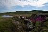 The fire point World War II (Kirovchanin) Tags: russia arcticocean barentssea thevillageofteriberka teriberka