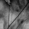 Spray catcher (OzzRod) Tags: sony a7rii meyeroptikgörlitztrioplan100mmf28 monochrome blackandwhite spider web closeup droplets bokeh square