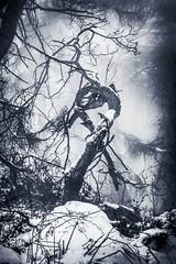 Dark Tails (gerainte1) Tags: tree woodland winter blackandwhite